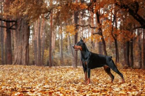 Cane da guardia in un bosco