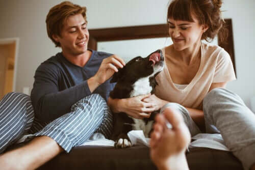 Umani che fanno le coccole al cane