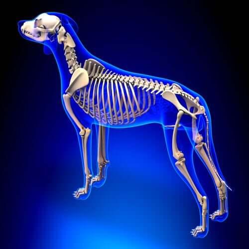La colonna vertebrale dei mammiferi è unica