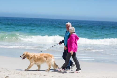 Grazie all'influenza degli animali domestici sulla vita umana, molte persone si muovono di più
