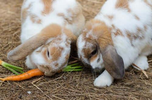 La verdura è molto importante nell'alimentazione del coniglio, ma va offerta in quantità moderate