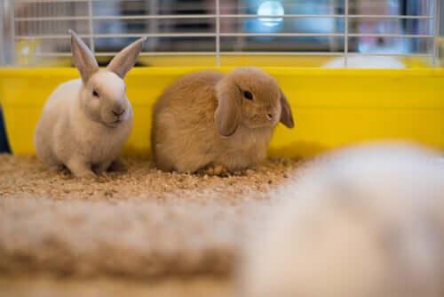 fieno e alimentazione dei conigli: un binomio imprescindibile
