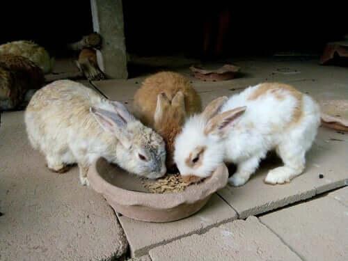 L'alimentazione del coniglio: quanto e quando deve mangiare?
