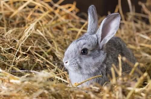 il fieno è una componente fondamentale nell'alimentazione dei conigli