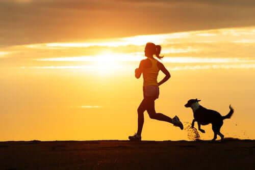 Cane e running: una combinazione eccezionale