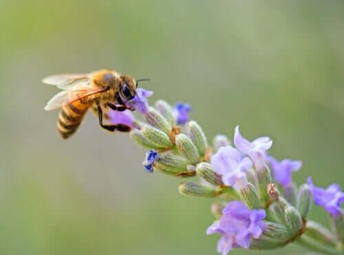 7 incredibili curiosità sulle api che vi stupiranno