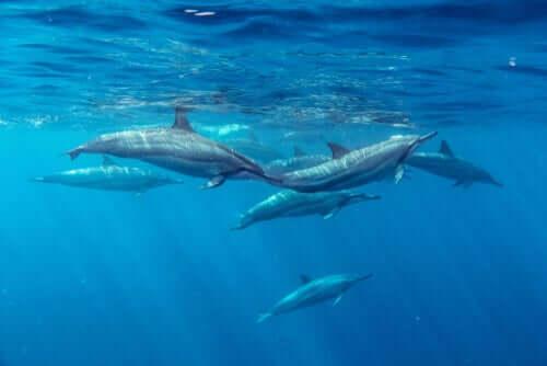 Mare nostrum: perché è importante prendersi cura dei mari