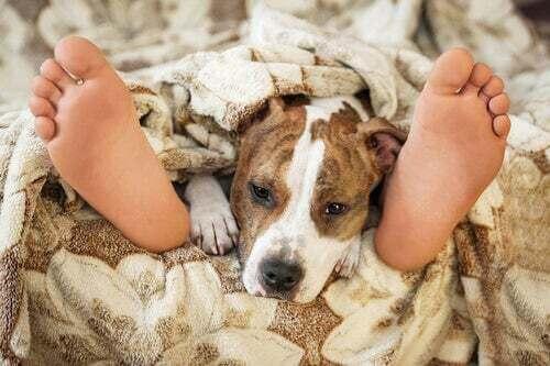 Dormire con gli animali domestici è sicuro?