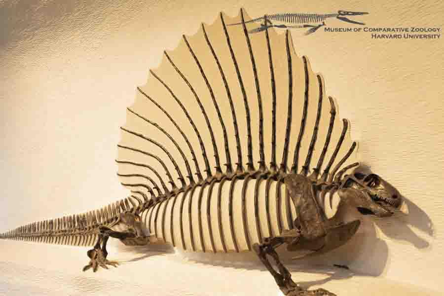 Rappresentazione dell'edaphosaurus