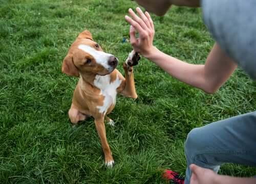 Educare o addestrare un cane: cos'è meglio?
