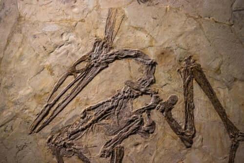 Sapevate che gli pterosauri non sono dinosauri?