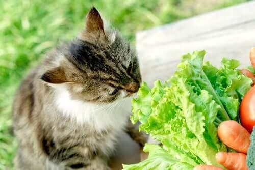 Gatto vegano