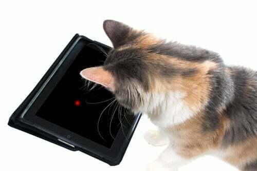 7 giochi da tablet per il vostro gatto
