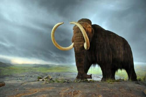 La storia degli ultimi mammut