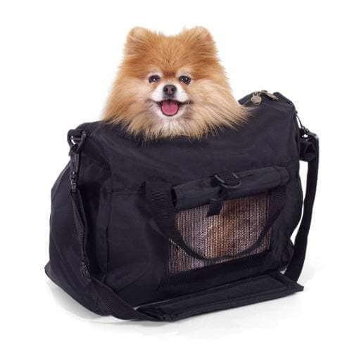 Come viaggiare sui mezzi pubblici con un animale domestico