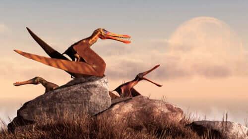 Pterosauri su una roccia