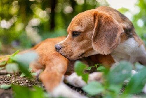 Quando bisogna sverminare il cane?
