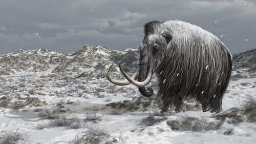 La storia degli ultimi mammut sulla terra