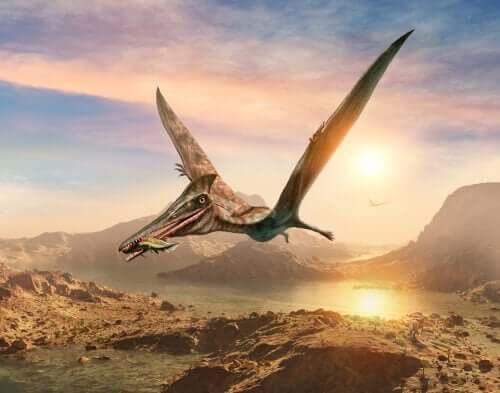 Pterosauro a caccia