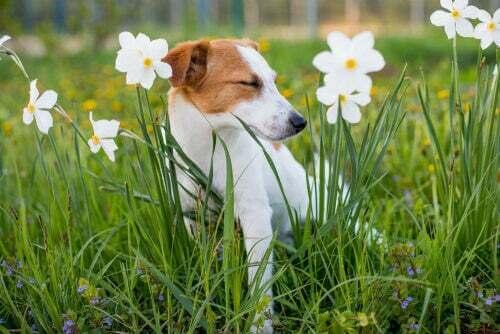 Allergia alle piante nei cani: sintomi e prevenzione