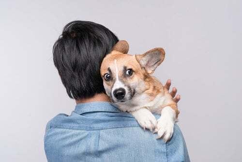 Cane che ha paura