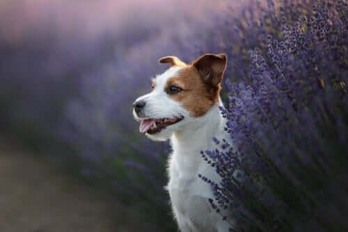 Piante medicinali per la salute degli animali