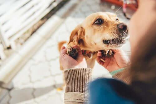 Come fanno i cani a riconoscere i membri della famiglia?