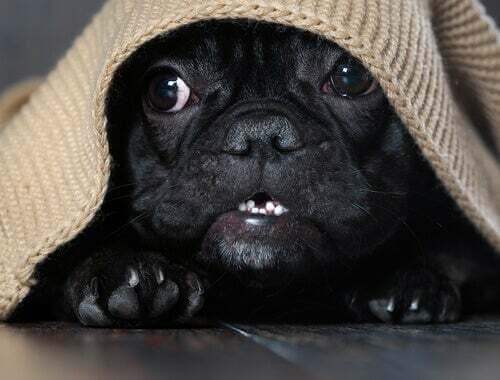 Come sapere se il vostro cane ha paura