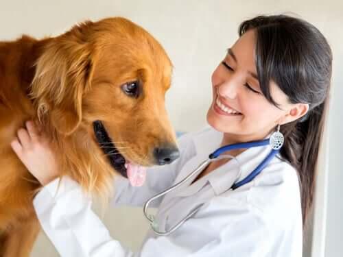 Leishmaniosi nei cani: sintomi, prevenzione e trattamento
