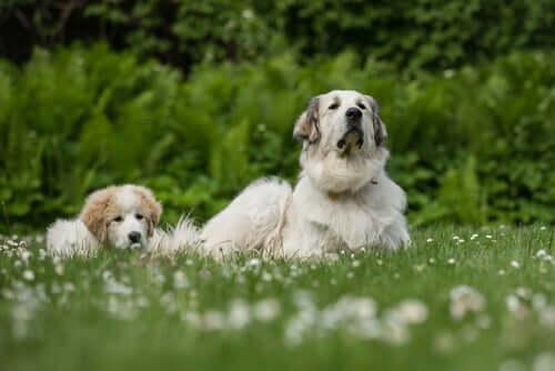 Cucciolo di cane e madre