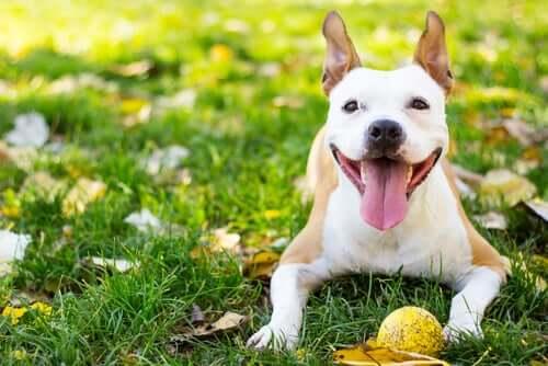 Cane felice e allegro