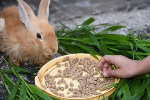 Quando fa caldo, i conigli possono mostrare mancanza di appetito
