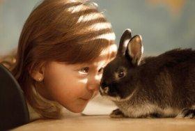 Come prendersi cura dei conigli quando fa caldo