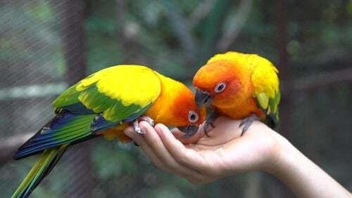 Coppia di pappagalli mangiano del mangime