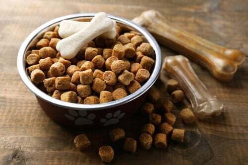 Motivi per evitare il cibo secco per cani.