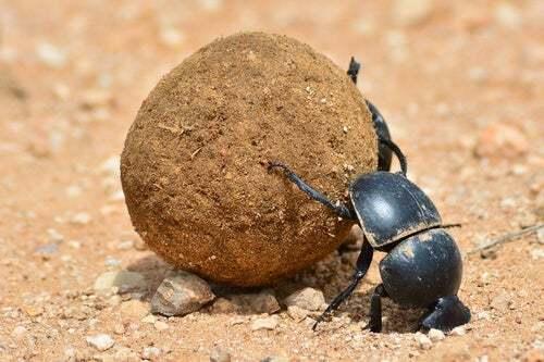 Scopriamo alcune curiosità sullo scarabeo