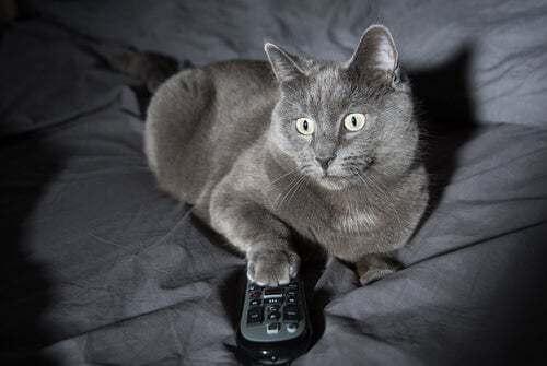 Perché i gatti sono animali notturni?