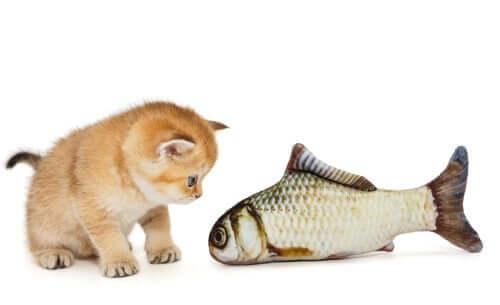 2 curiosi aneddoti sui gatti e i loro padroni