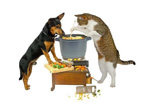 i cibi dell'uomo che anche i gatti possono mangiare