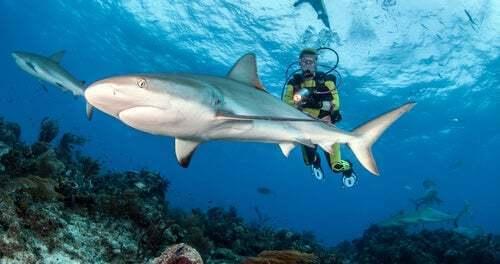 Le immersioni con gli squali sono pericolose?