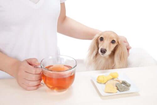 Infuso a base di piante medicinali per la salute degli animali