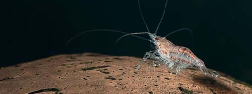 Il krill negli ecosistemi oceanici