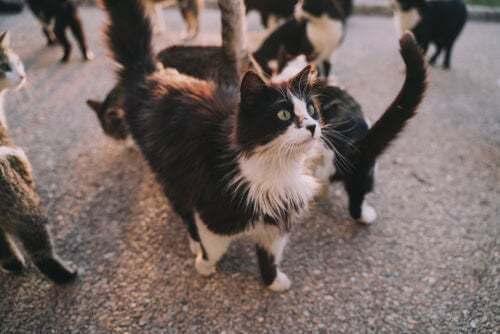 Malattie che i gatti possono trasmettere alle persone