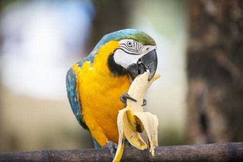 Cosa può mangiare un pappagallo?