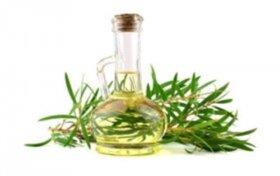 4 benefici dell'olio dell'albero del tè sui cani