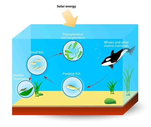 Orca nella catena alimentare Una sostanza tossica minaccia la sopravvivenza delle orche