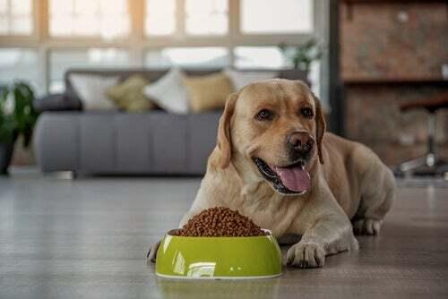 Prebiotici per cani