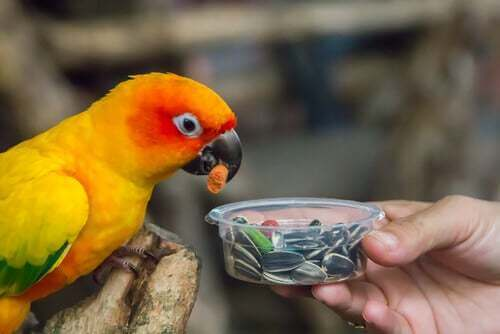 Pappagallo mangia un seme