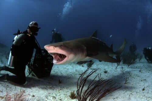 Sub in mezzo agli squali