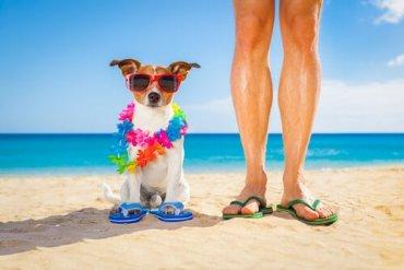 5 attività estive da fare con il vostro cane